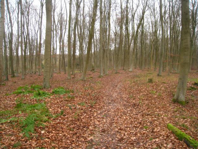 Path to Blackwood Cottage