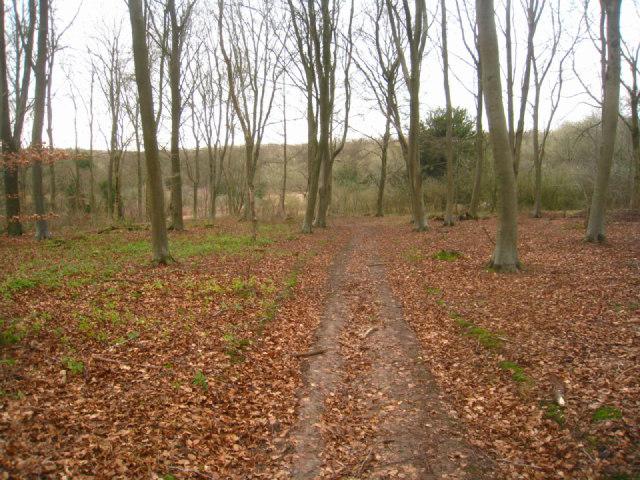 Path towards Blackwood Cottage