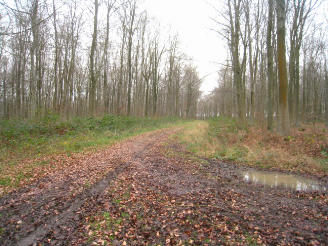 Track to Bradley Farm