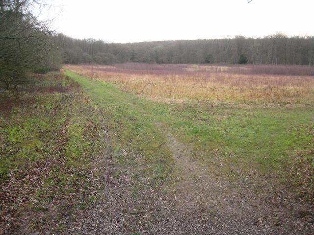 Open ground - Black Wood