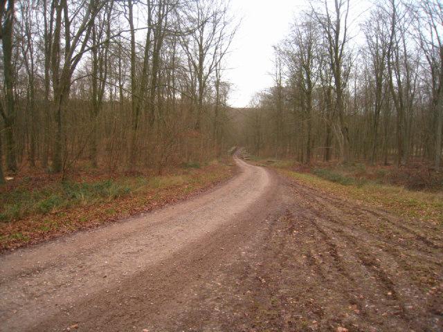 Major forest track - Black Wood