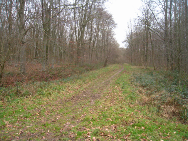 Forest track - Black Wood