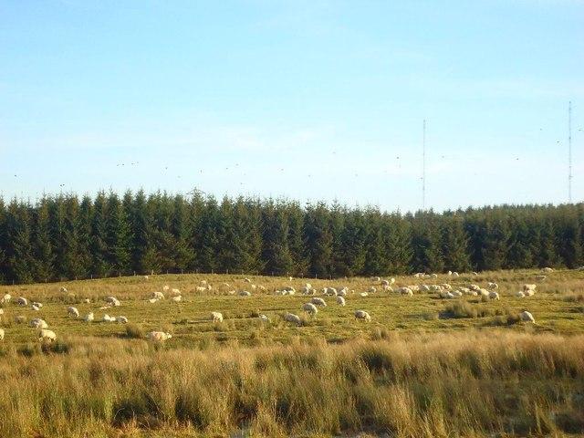 Auchengean, grazing