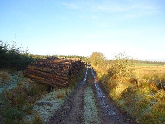 Auchengean, timber stack