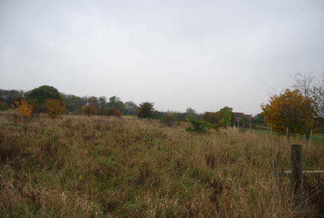 Rough grazing near Rabbit Shaw