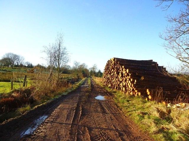 Auchengean, timber stack [2]