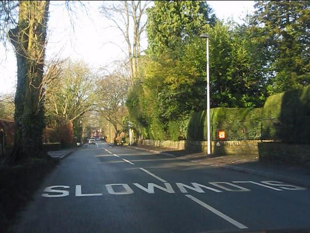 Ivy Lane - slow coming & going