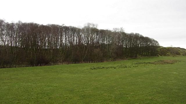 Woodland, Cullaloe
