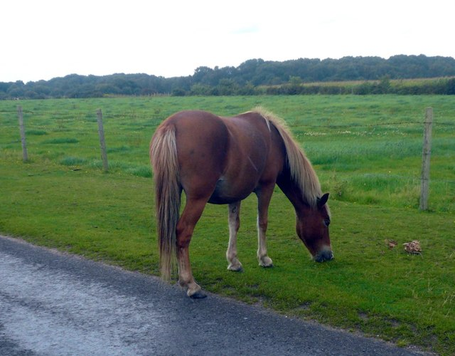 Pony near Black Knowle Heath
