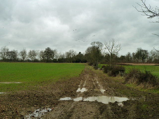 Footpath north of Cook's Pits