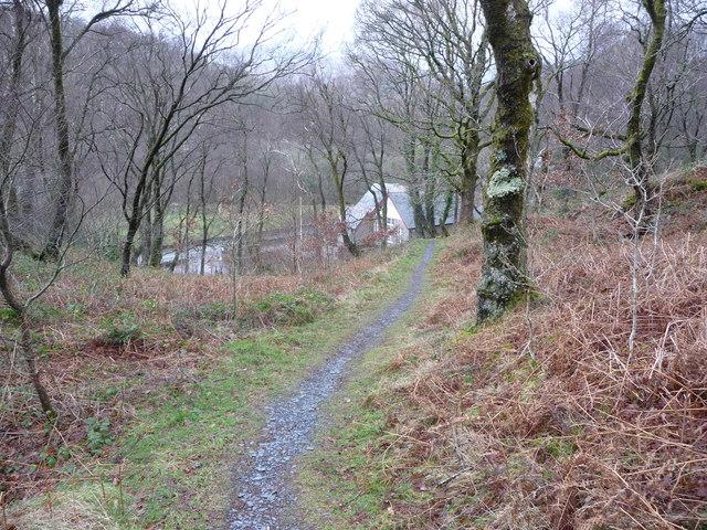 Woodland path above Capel Curig
