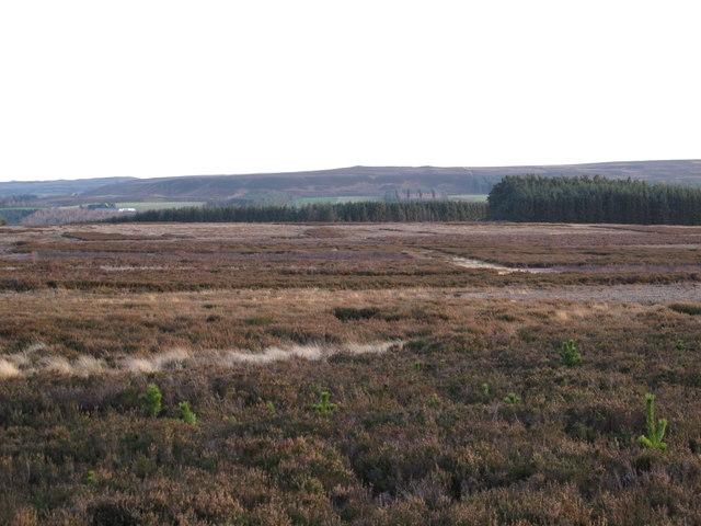Plantations on Winnowshill Common