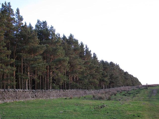 Plantation west of Esper Shields