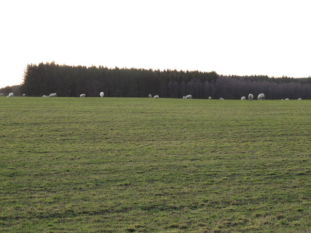 Pastures east of Square Plantation