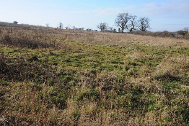 Rough grassland at Fernhill Heath