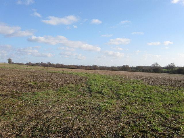 Kiln Field/Gate Field