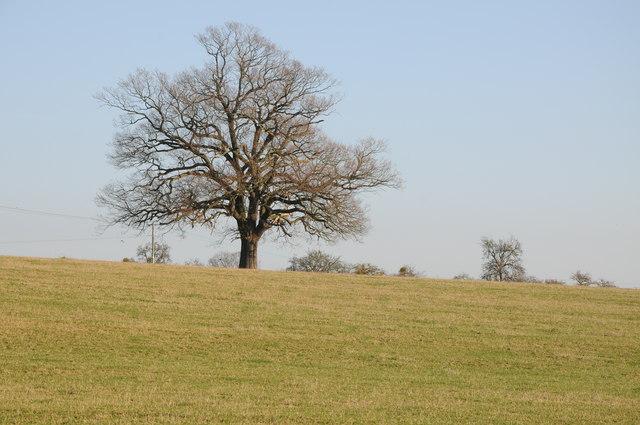 Tree near Brownheath Common