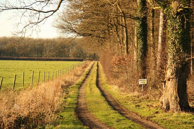 Waterloo Wood track