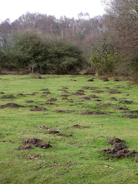 Molehills, Burbush