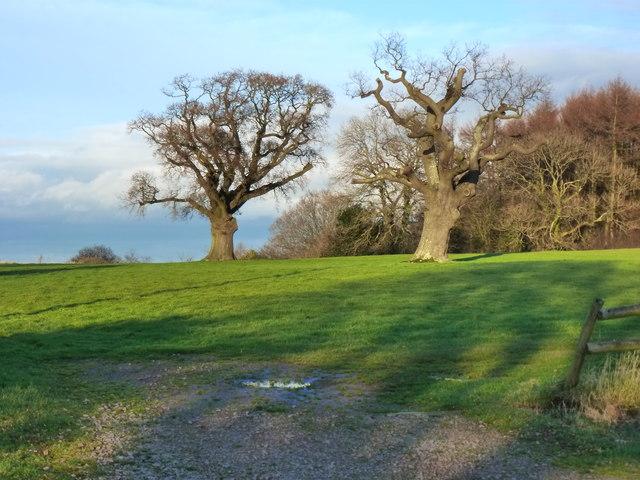 Winter trees looking towards New Wood, Catsash, near Newport