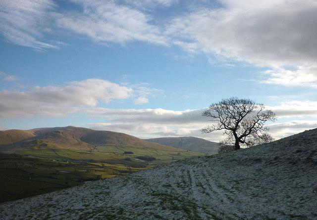 Tree on a frosty slope
