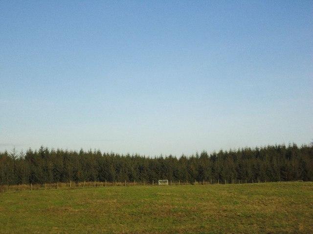 Beam, pasture