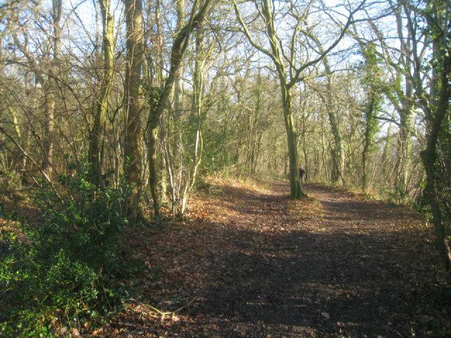 Path by Broad Oak Bridge