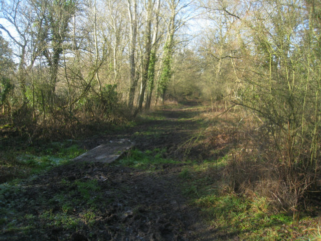 A muddy path - Odiham Common