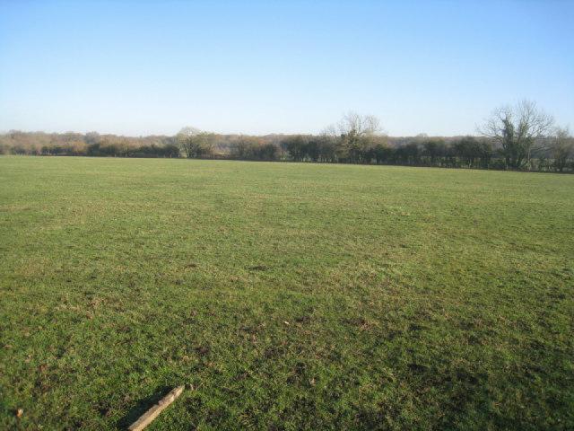 Grazing field - Poland Farm