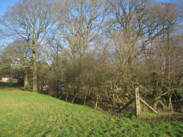 Wet woodland (Totters Lane)
