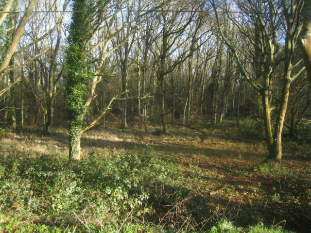 Odiham Common - northern fringe