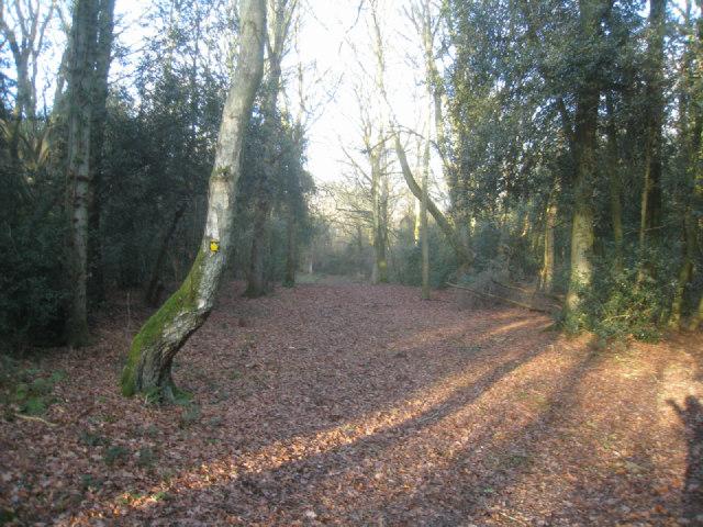 Broad footpath - Odiham Common