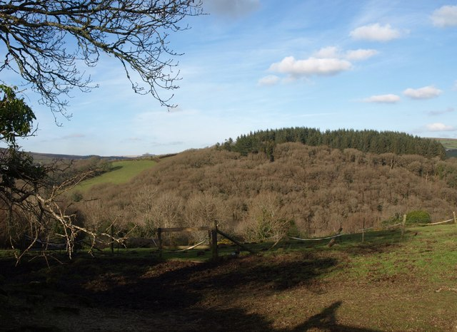 Town Wood, Ponsworthy