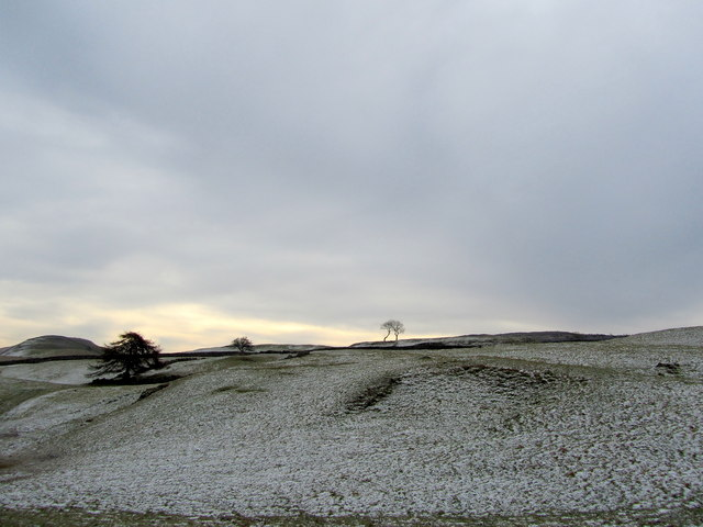 Pastures to the East of Wharfe Wood