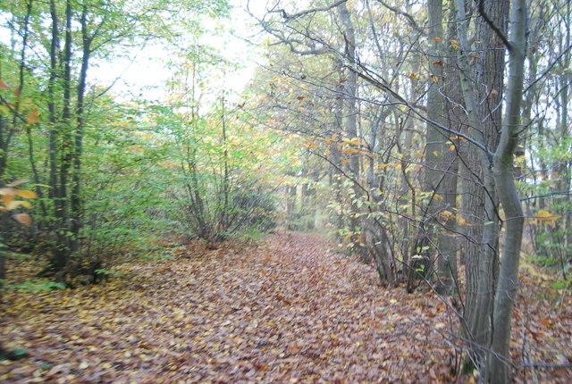 Footpath, East Blean Wood