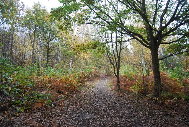 Footpath in East Blean Woods