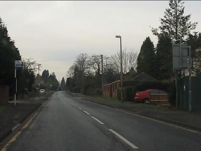 Greyhound Lane