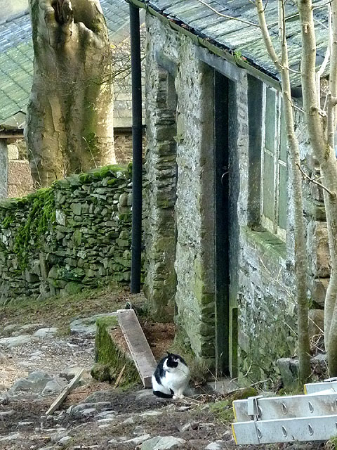 Farm cat at Hill Top