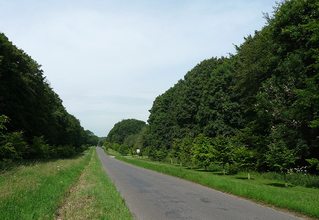 Country road near Micheldever