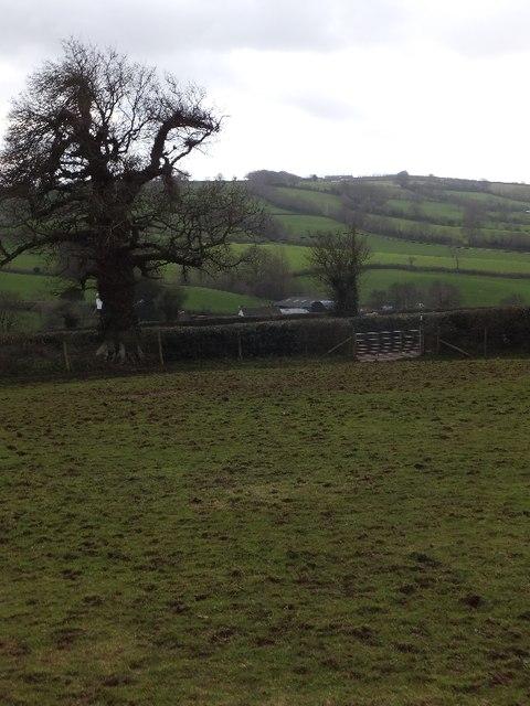 Footpath across field in Butterleigh
