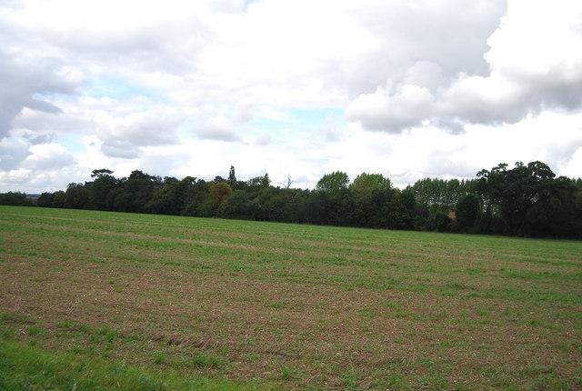 Woodland across farmland