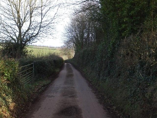 Minor road passing a small plantation near Shebishaies