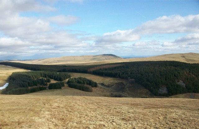 Looking  towards Gwern Feifod  wood