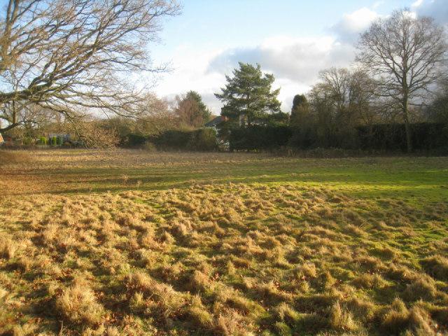 Grazing field - Pardown
