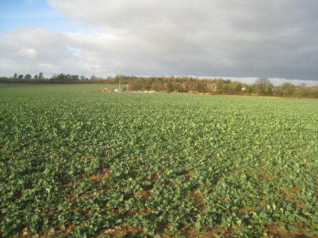 Winter crop - Oakley
