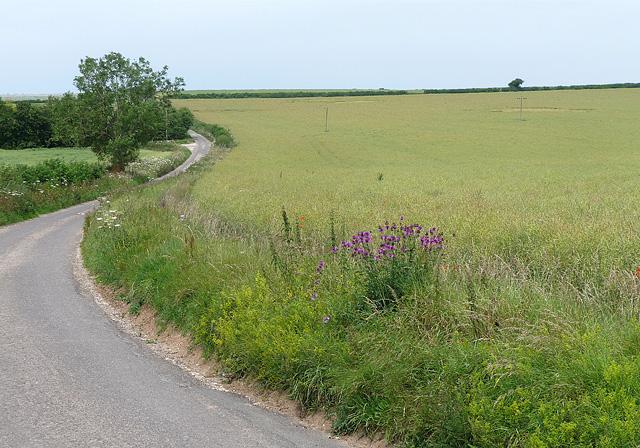 Farmland near Woodmancott (2)