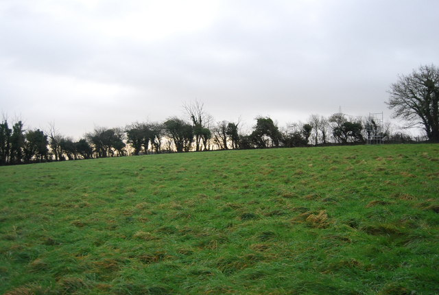 Field above Winterbourne Abbas