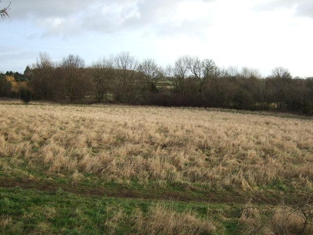 Farmland beside cycle track