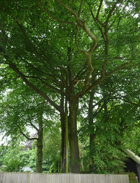 Beeches, West Tisted