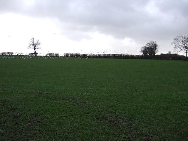 Farmland, Crag Hill